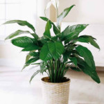 House Plants and Your Health
