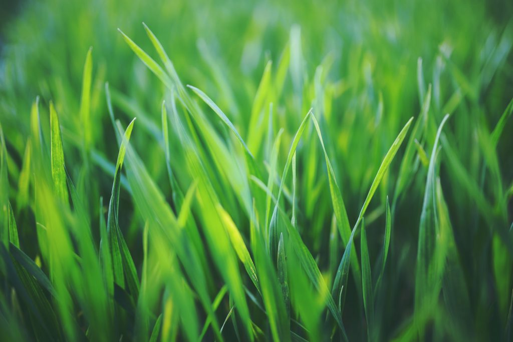 healthy lawn without chemicals